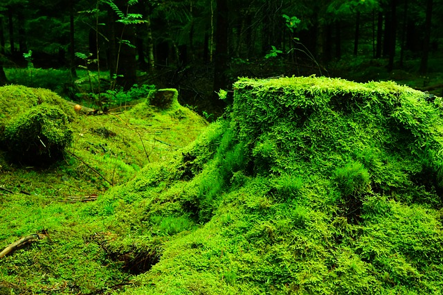 Moss Invasive Species
